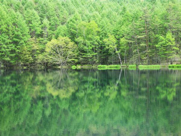 【御射鹿池(みしゃかいけ)】東山魁夷の絵のモデルになった池。湖面に映る新緑がキレイです