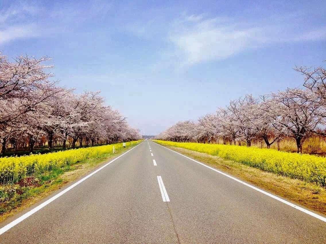 県道298号線「菜の花ロード」
