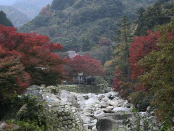雄大な自然が美しい、湯の山の紅葉(^^)