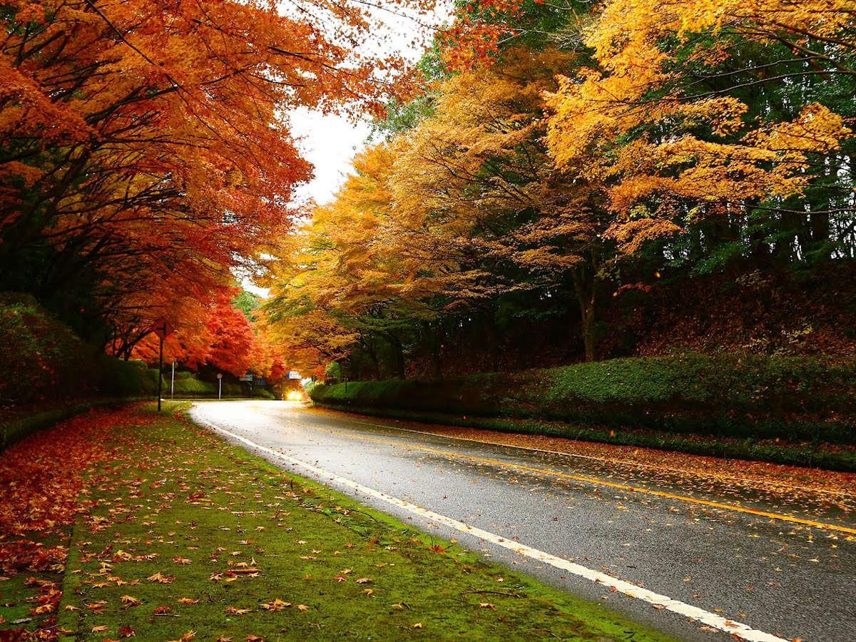 当館前も通る国道223号沿いもきれいな紅葉に染まります。