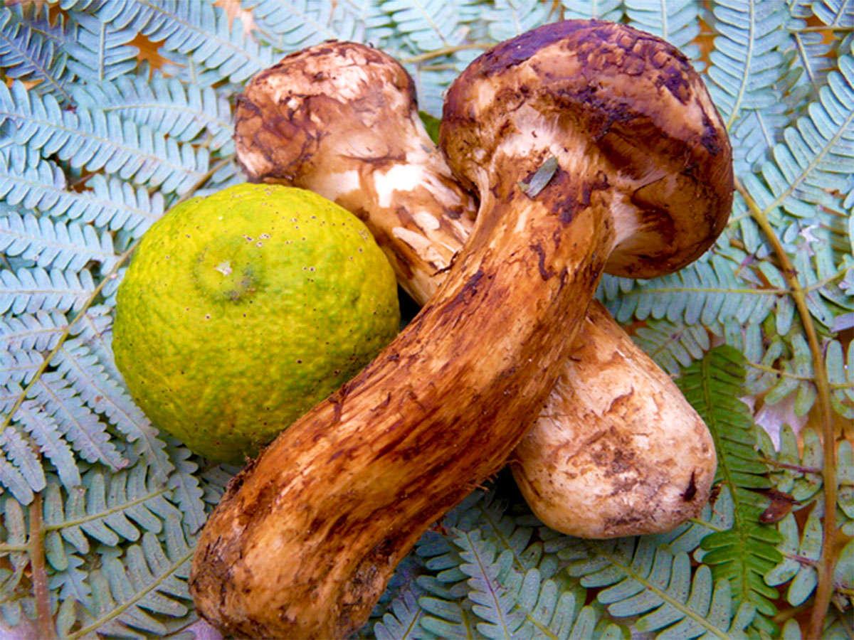 秋の味覚の王様『松茸』を贅沢に使った【期間限定プラン】をご用意致しました♪芳醇な香りが食欲をそそる♪