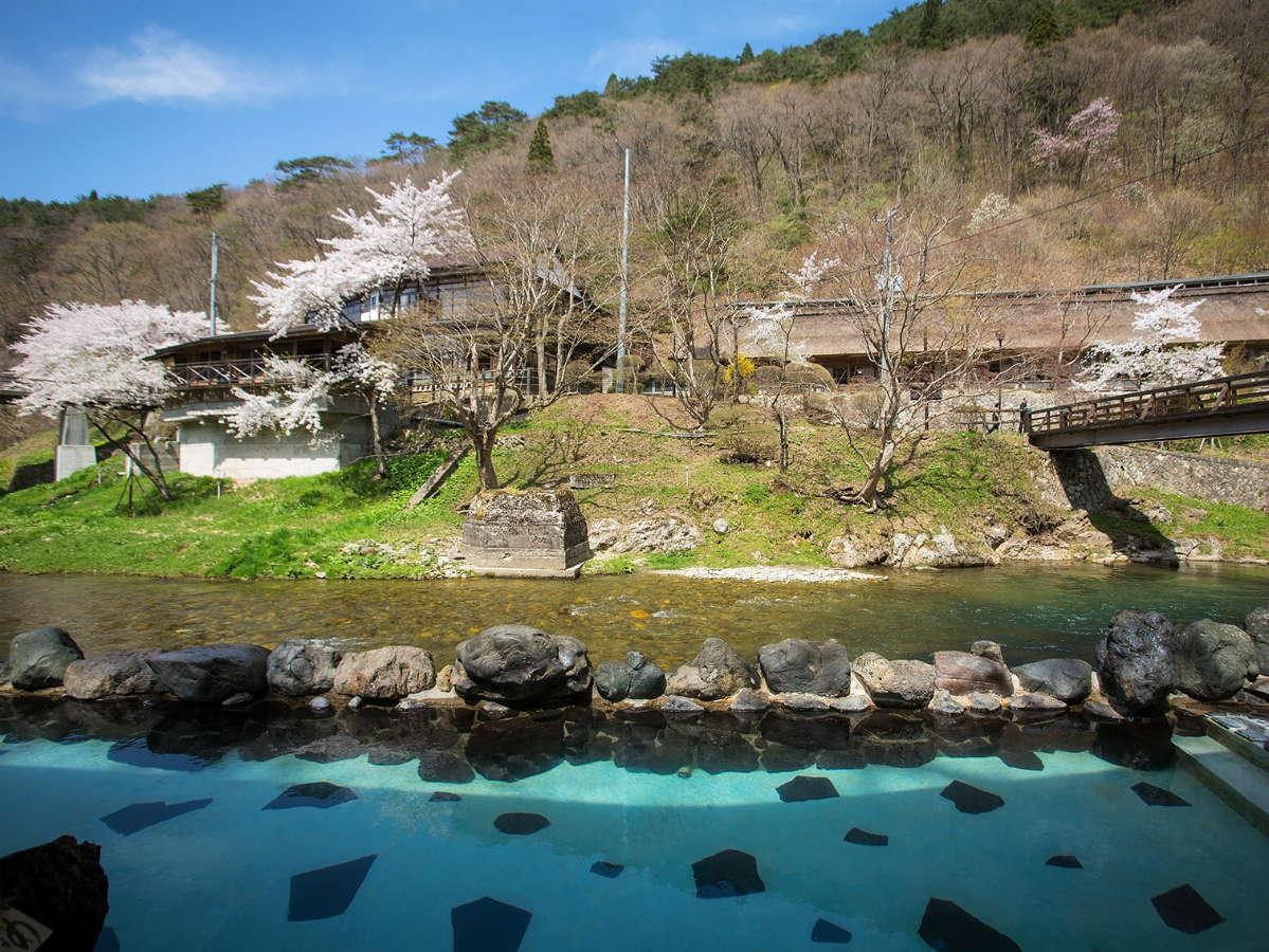例年4月後半に桜が咲きます!花見露天風呂お楽しみください!