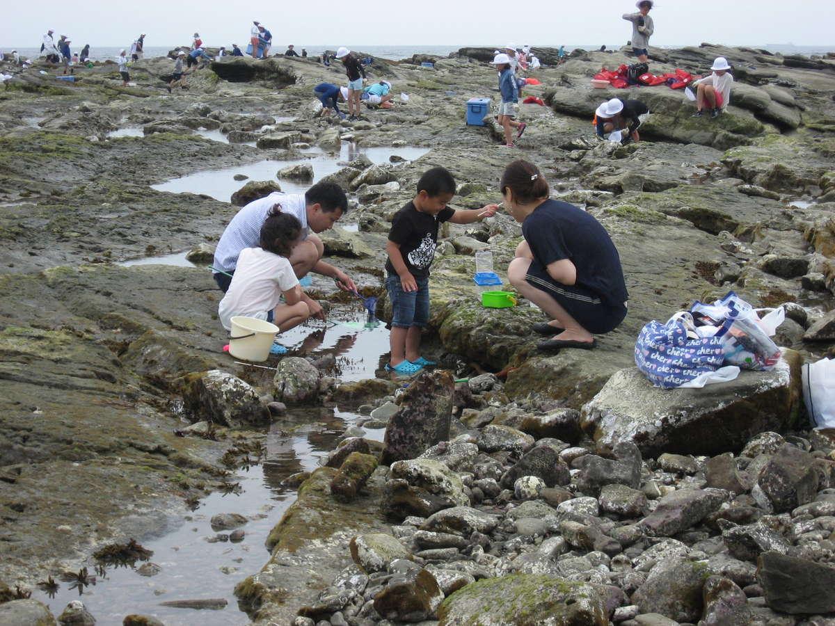 白浜塩浦海水浴場砂場と岩場があり千葉県でも大変珍しいです。子どもさんの自由研究の宿題にも最適です。