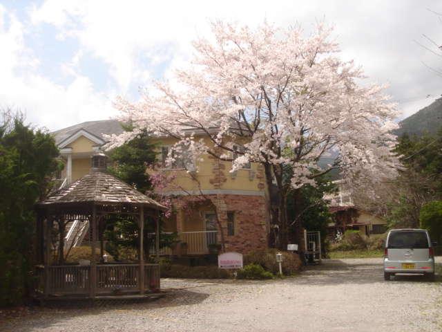 桜の季節の素泊りinn