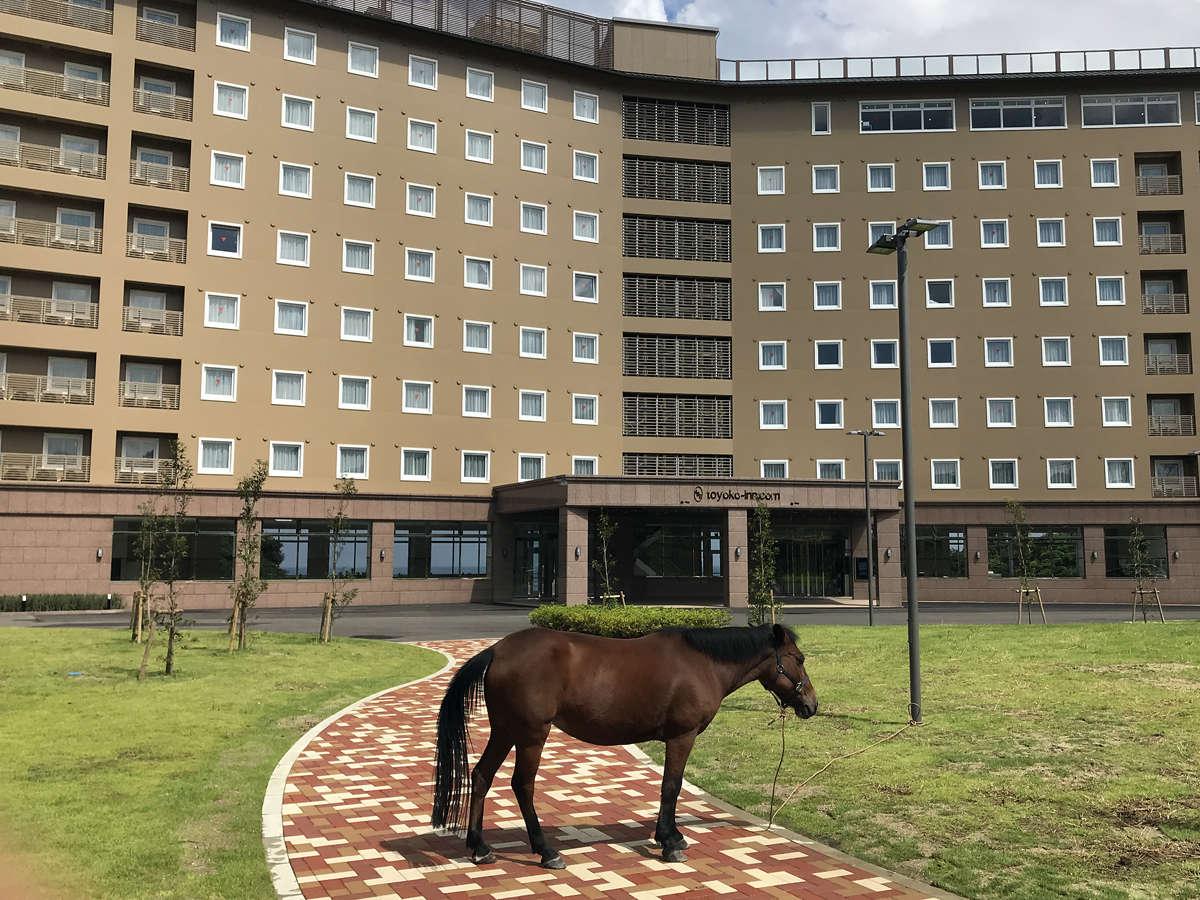 ホテルには、対馬固有の対州馬が飼われています。