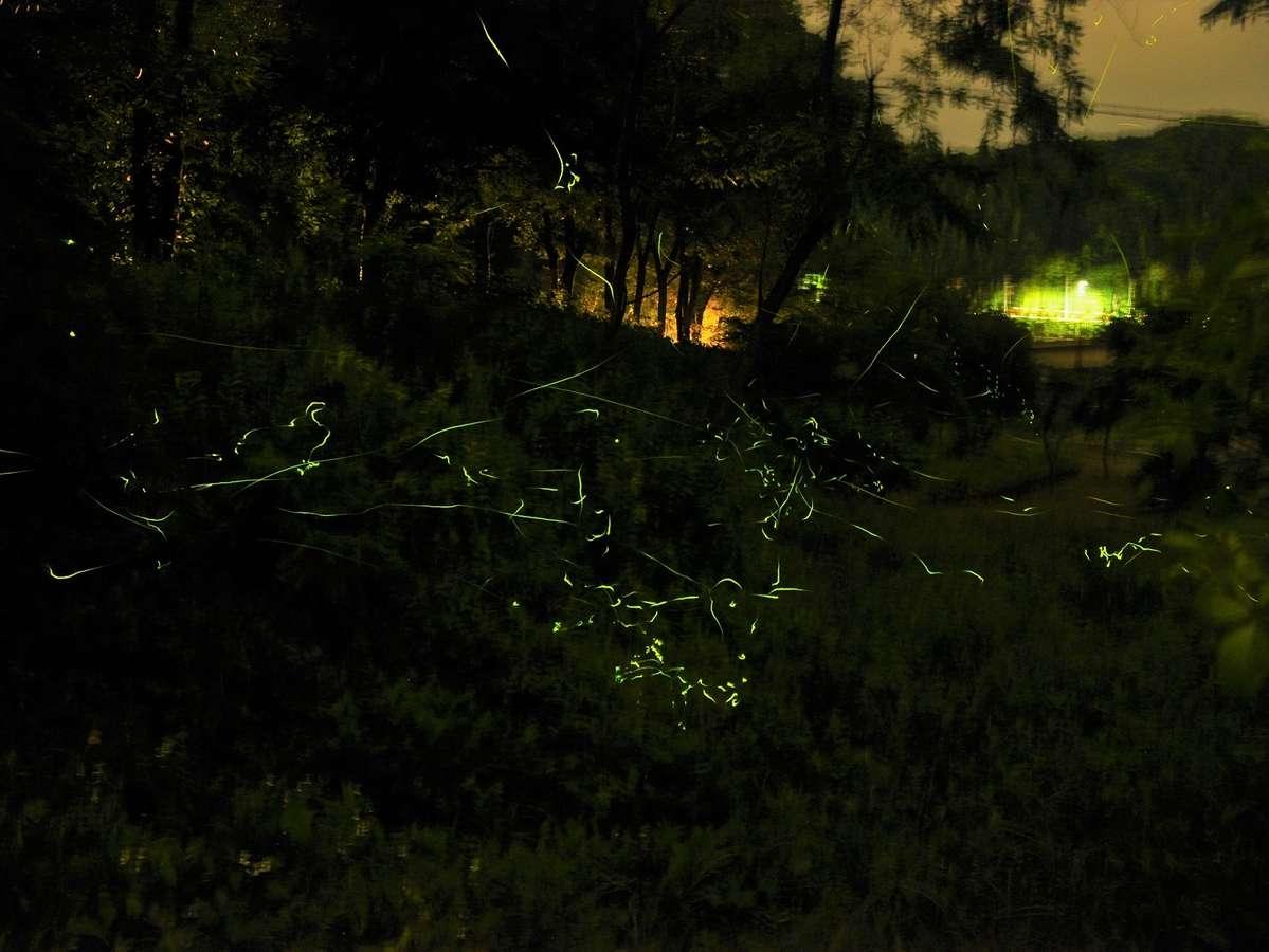 両神荘下の小森川ではホタルが飛び交います(徒歩5分。見頃は6月中旬~7月上旬)
