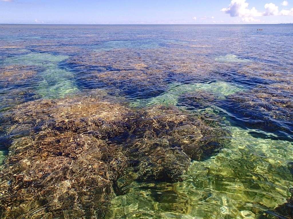 お部屋から徒歩一分の海岸には珊瑚の迷路が広がっています