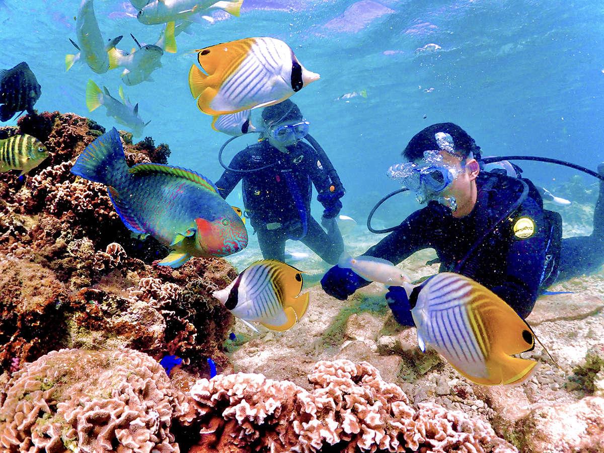 【青の洞窟体験ダイビングプラン】[記念撮影無料]熱帯魚と戯れながら自由にお愉しみください。