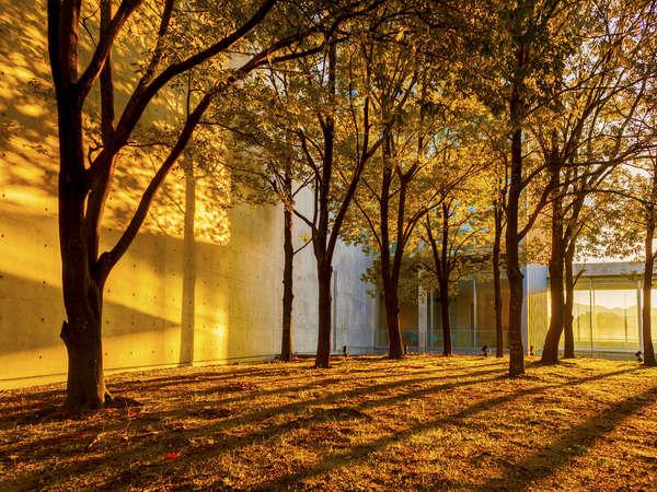 敷地内:新緑や紅葉シーズンは、色鮮やかに敷地を彩ります。