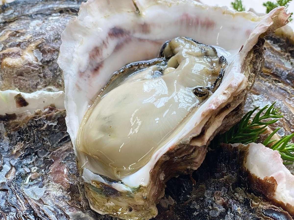 海士町産の岩牡蠣。旬は3-5月、肉厚でクリーミー、濃厚な味わいの中にもさわやかな甘みを含んでいます。