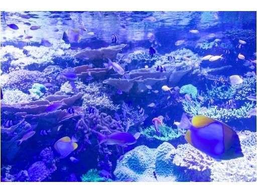 【観光】名古屋港水族館