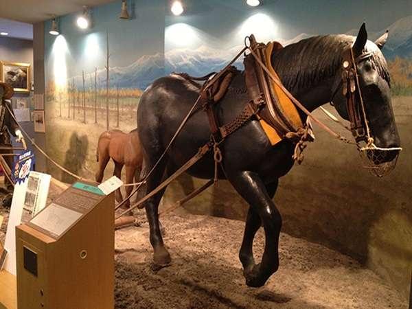 ◆馬の資料館