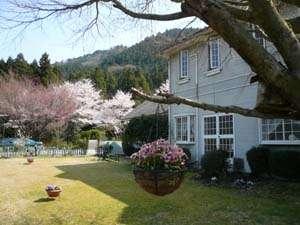 庭先から望む桜。