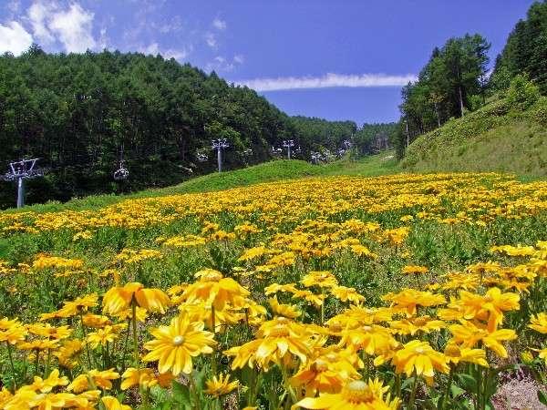 【ヘブンスそのはら】 8月はクレオメが咲き乱れます。