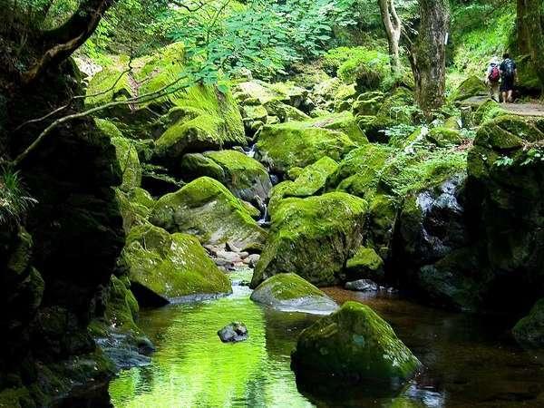 ●歩いて5分♪赤目四十八滝渓谷内。美しい世界が広がります。