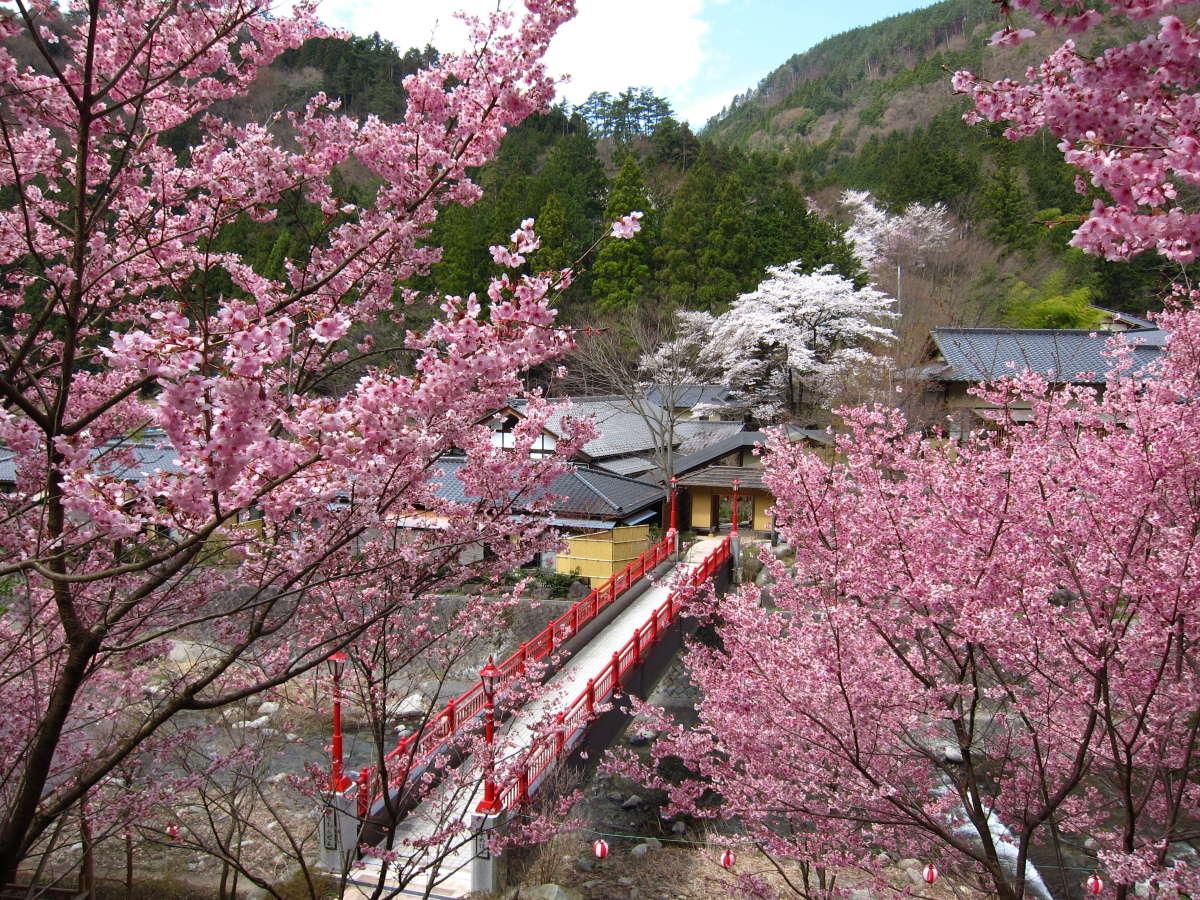 庭園内に架かる朱色の亀橋と桜のピンクが美しいコントラスト(例年4月10日前後が見頃)