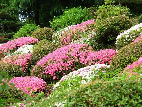 春は中庭のツツジが満開になります!!