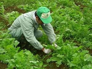 自家菜園にこってます。安全でおいしい野菜を提供しますよ!
