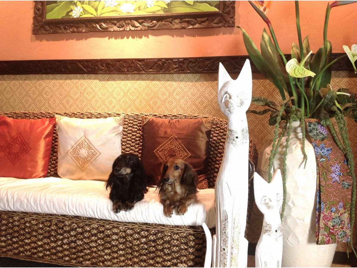 ロビーにあるソファはバリ島の雰囲気で絶好のフォトジェニックスポット!