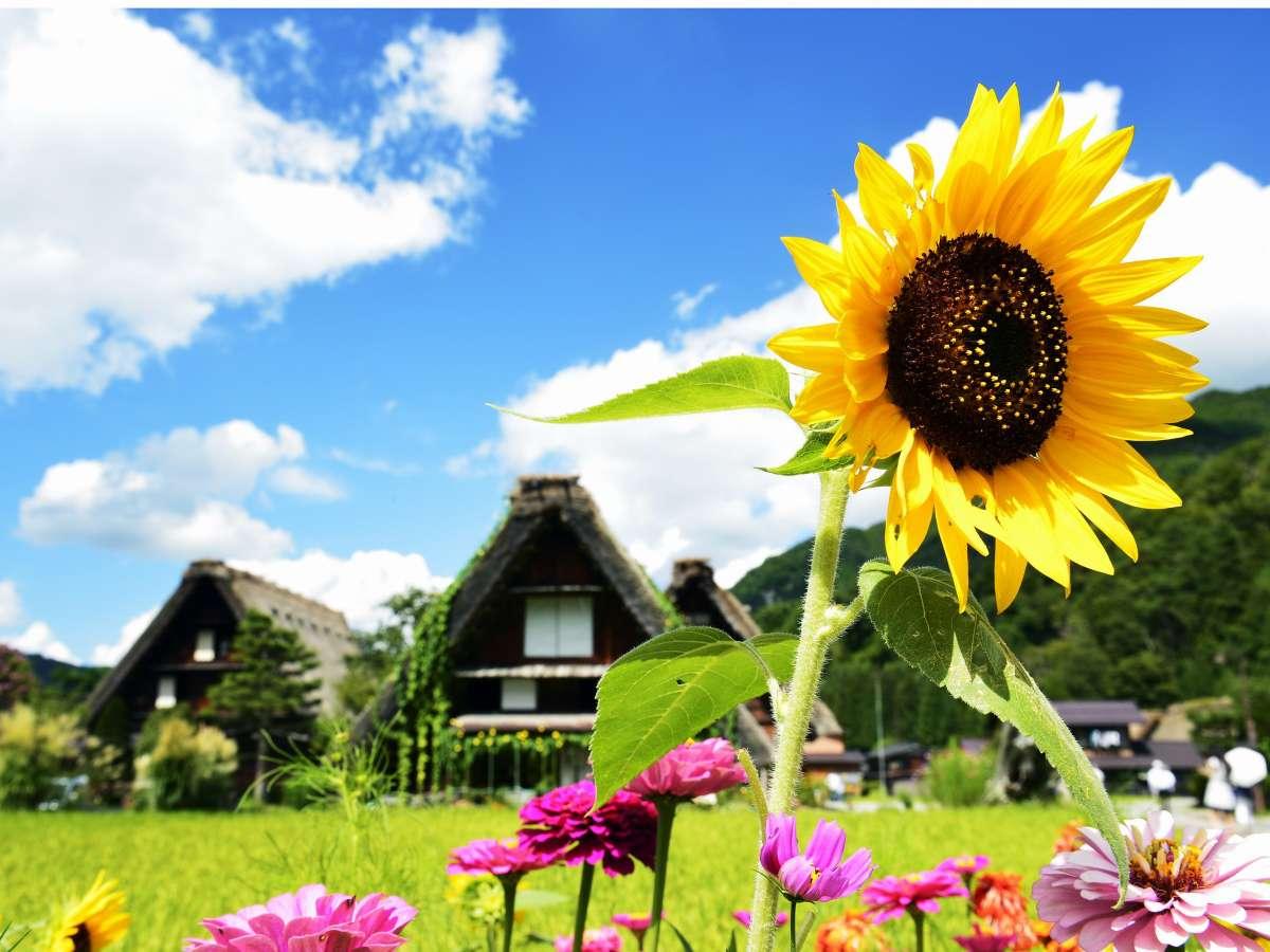 【夏季】夏の合掌造り白川郷は緑に包まれ散策が楽しい季節です。