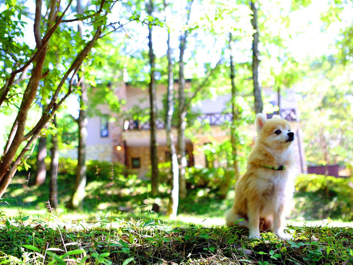 中庭から本館を望む。わんちゃんと一緒に森林浴。