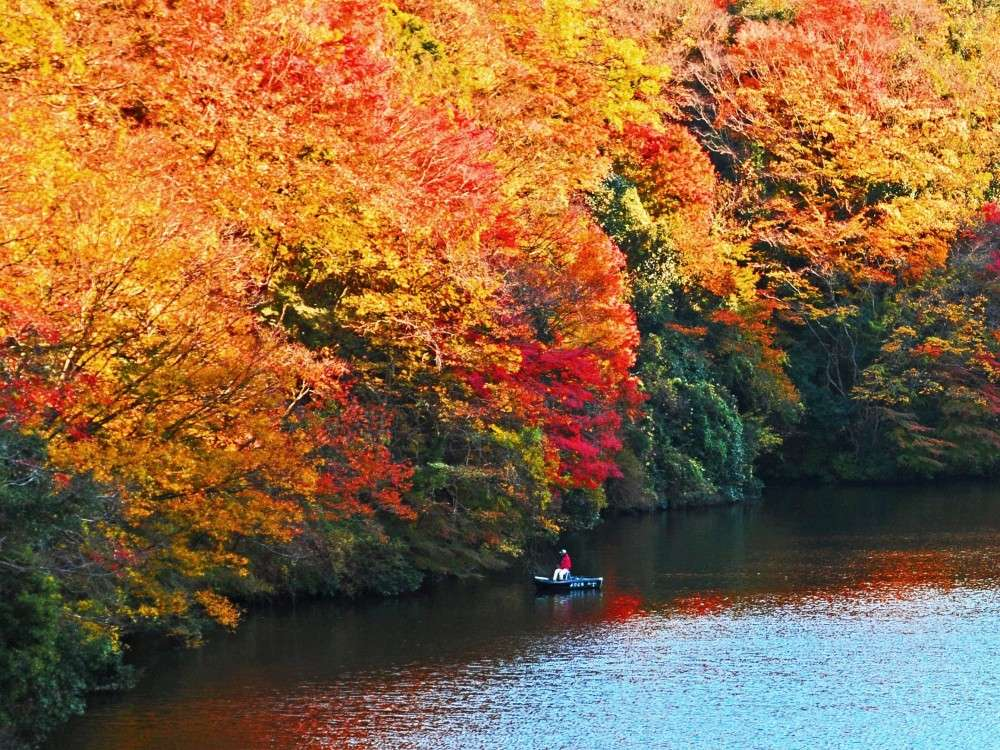 本州一遅い紅葉、見頃は11月下旬~12月中旬