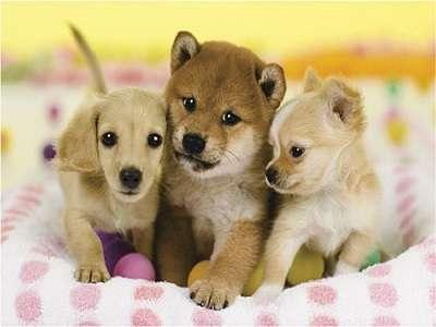 ★4組限定★大好きな愛犬と一緒のお部屋に泊れます♪