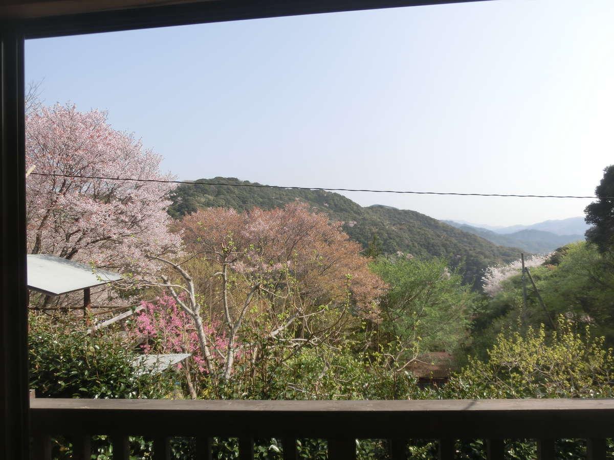和室東側の展望です。周辺の4月の初旬は山桜が満開となります。