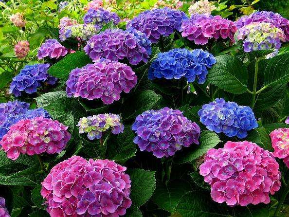 【近隣観光】近隣には数多くの公園が四季おりおりの花を咲かせています(写真は相模原北公園)