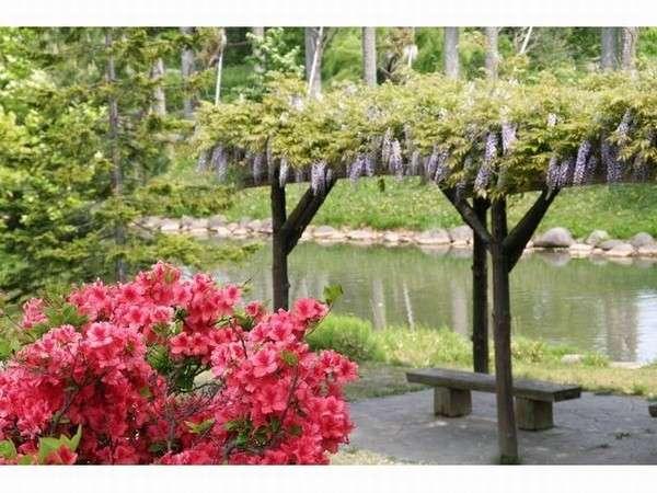 【中島公園 (春)】朝のお散歩にオススメ