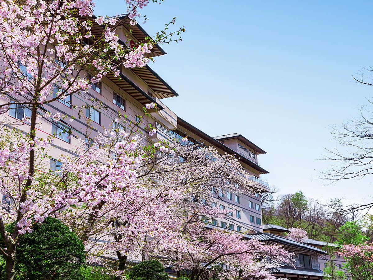 【春】当館のそばに咲くうす桃色の桜。登別の桜の名所「桜街道」の見ごろはGW頃です。