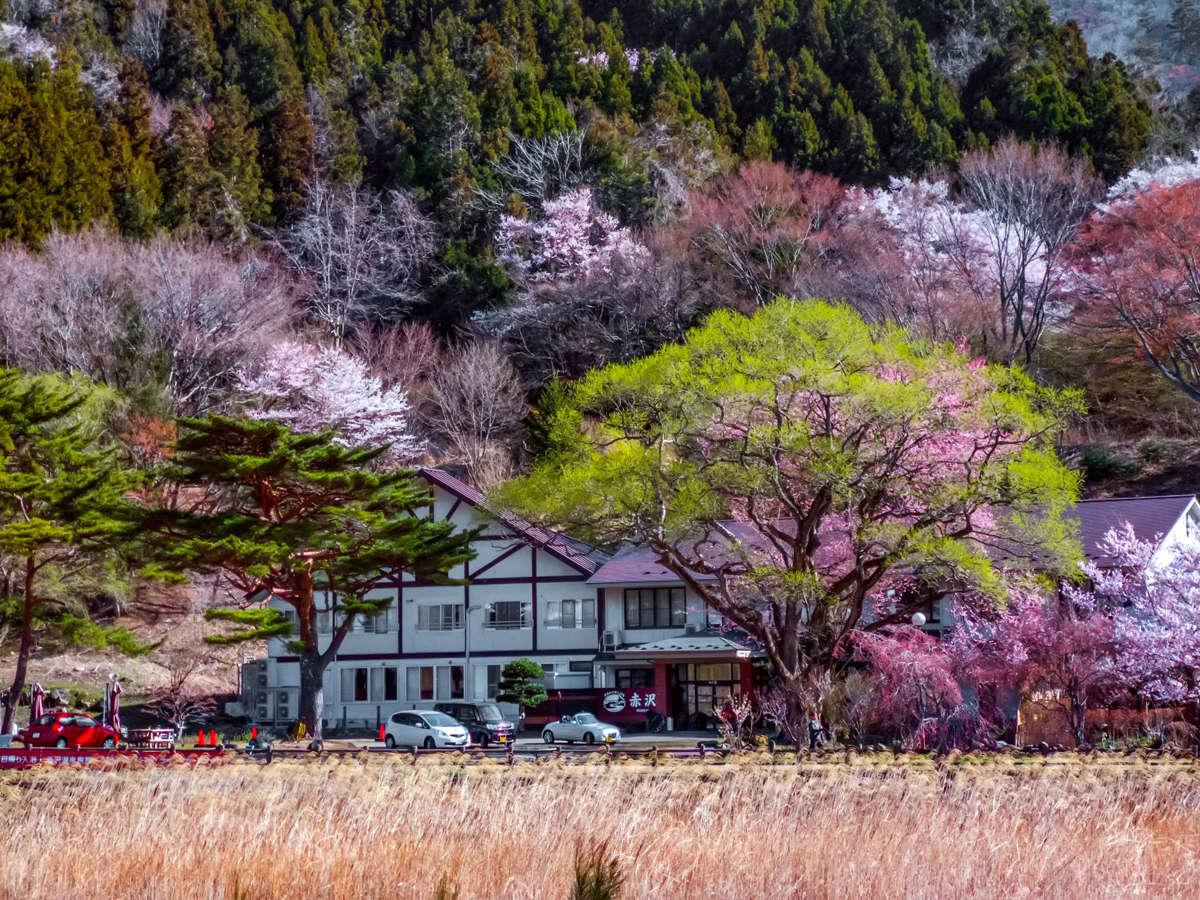 春になると当館の周りには花々が咲き誇ります