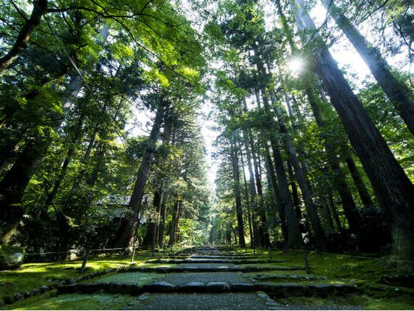 【平泉寺白山神社】今年は白山開山1300年。一面に広がる苔のじゅうたんと石畳の景色は見物!