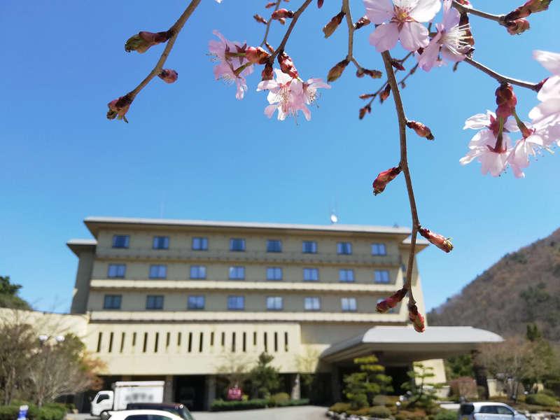 2019.4月下旬 桜の咲き始め