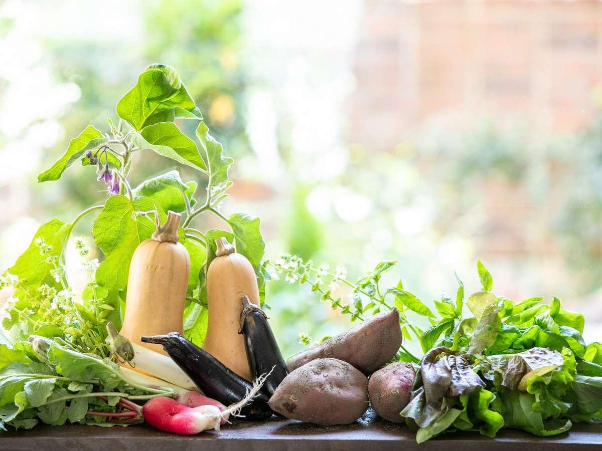 自家農園でとれた野菜です。ご朝食のスープやお食事としてご提供しております。