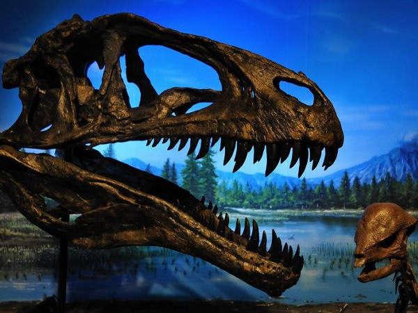 恐竜の不思議と発見の「福井の恐竜博物館」