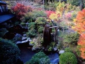 【日本庭園の紅葉】四季折々いろんな表情を見せる日本庭園。ロビーから見下ろした角度。