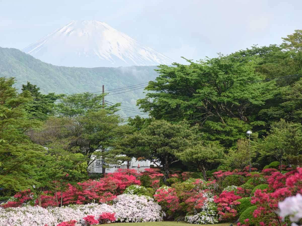 *【庭園】5月のつづじの季節は満開のつつじと富士山を一緒にパシャリ♪最高のフォトスポットです。