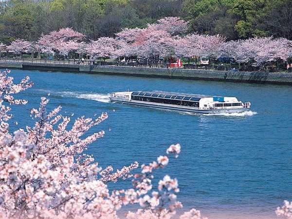 ~春~水上から眺める約4000本の桜並木。