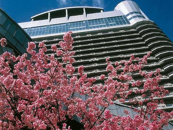 ~春~ホテル周辺で一番先に咲く桜、「ヨウコウ」