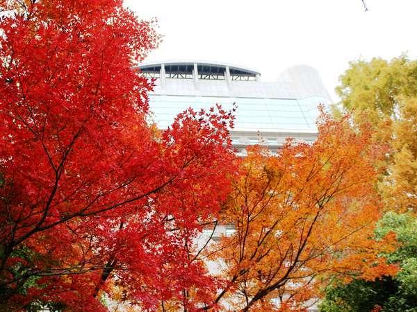 ~秋~ホテル前の公園から見上げたホテル