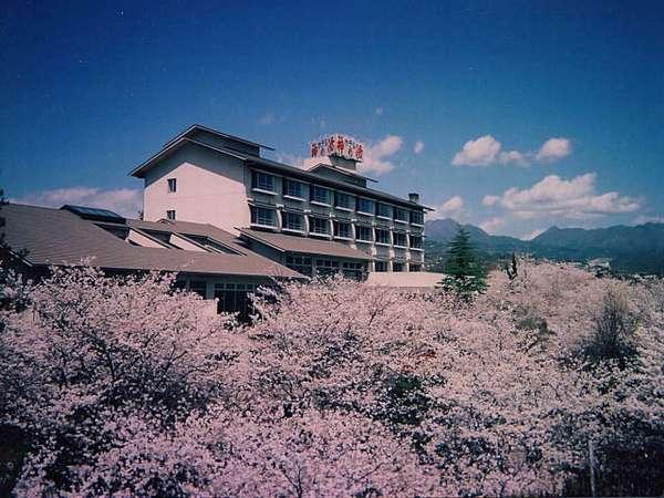 【全国の桜ランキングで堂々1位】Yahoo! JAPANに掲載!温泉ジャーナリスト野口悦男さんが選んだ