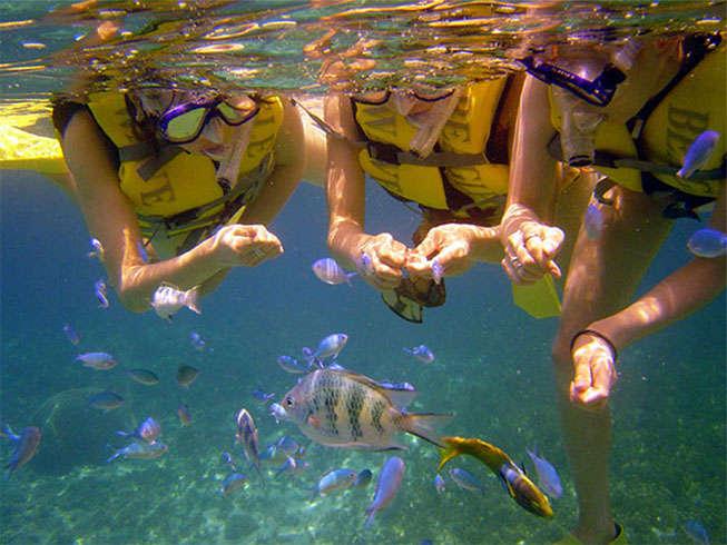 【マリンスポーツ】シュノーケリング。水面から手軽に海中を覗ける、手軽なマリンメニュー。