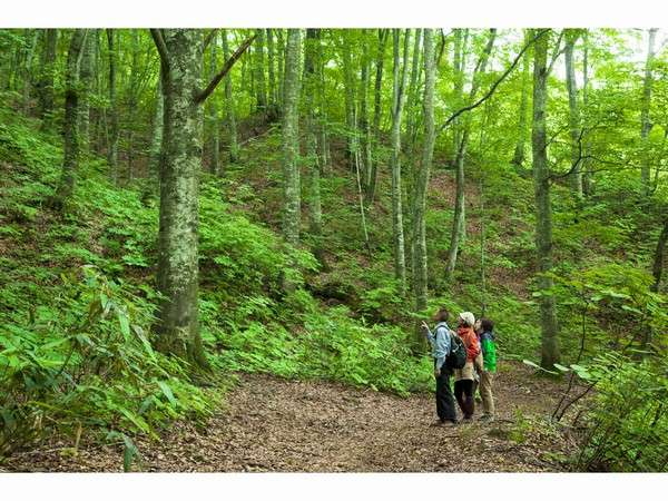 世界自然遺産登録地域のブナ林