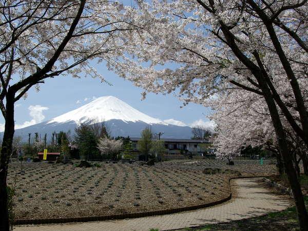 桜と富士と公園