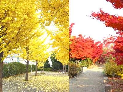 山梨県立美術館は隠れた紅葉の名所