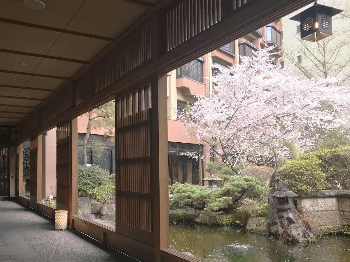 日本庭園桜