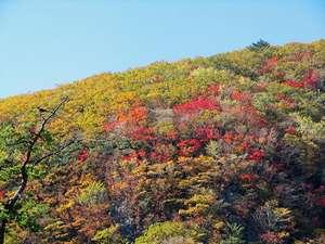 【ホテルより黒岩山の紅葉を望む】10月中旬より11月上旬まで