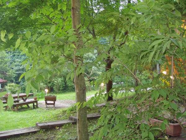 標高800M( ポコアポコの中庭)自然の中