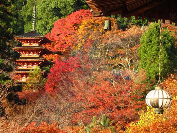 【長谷寺】本堂の外舞台から眺める五重塔と紅葉が見事です!
